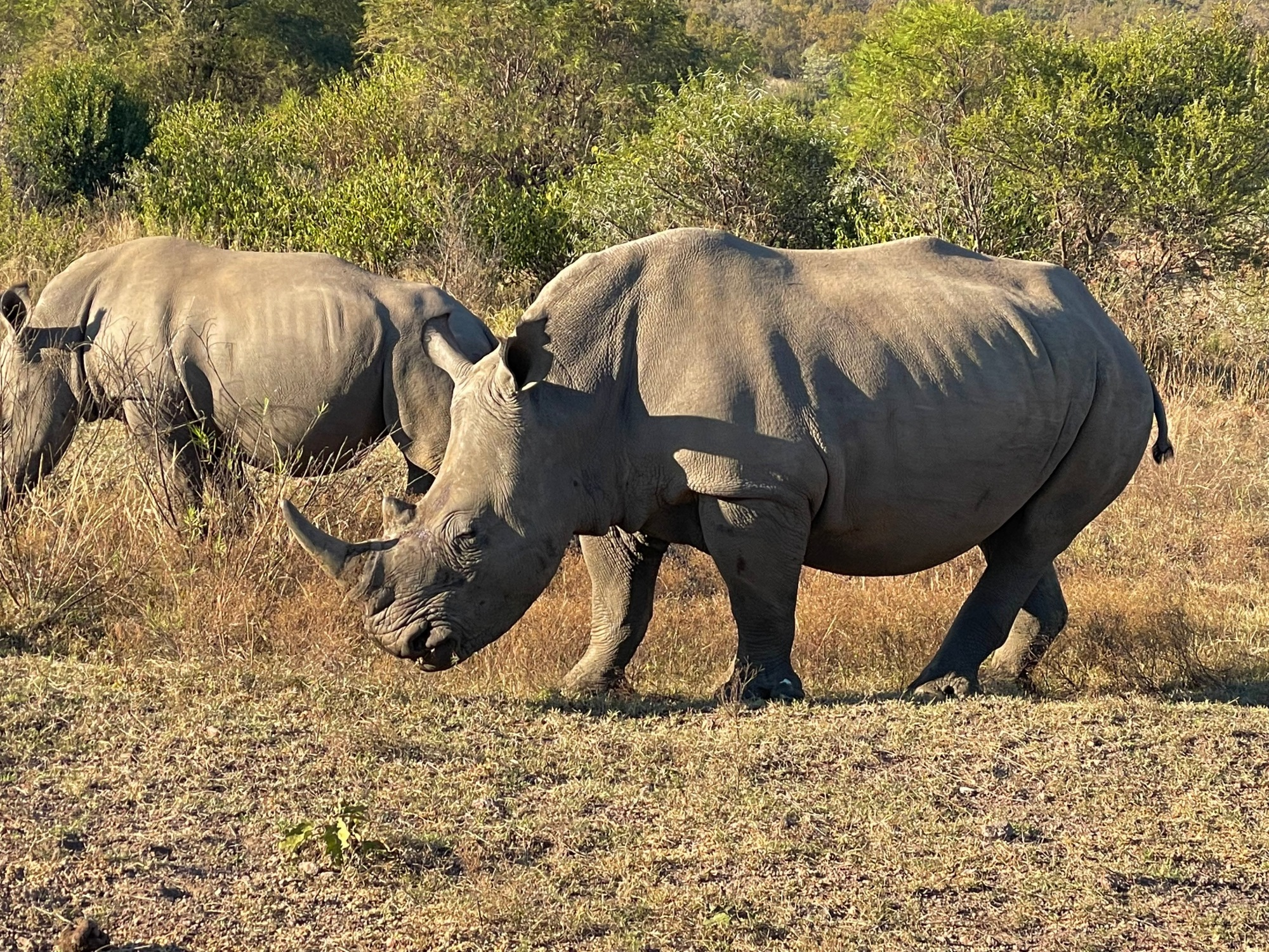 Rhino at Dinokeng Game Reserve